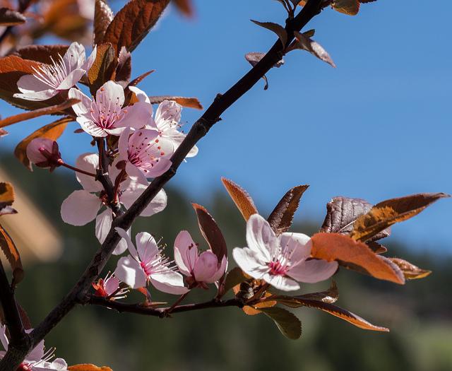 "Poema ""La primavera"" – Joan Amades"